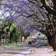 Escapade en Afrique du Sud, visiter la ville de Pretoria