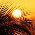palm soleil jamaïque