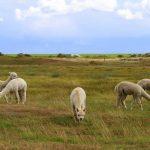 Découverte des îles de la Frise pendant les vacances
