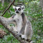 Les parcs nationaux les plus intéressants de Madagascar