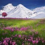 Pourquoi réaliser un séjour dans les Alpes ?
