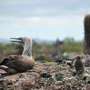 Voyage dans l'archipel des Galápagos : 2 îles à ne pas rater