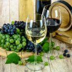 Oenotourisme au Portugal : Quelles régions viticoles explorer ?